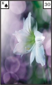 Lenormandkarte 30 die Lilie